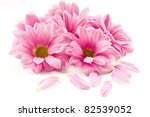blooming beautiful pink flower isolated on white background - stock photo