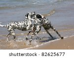 two dalmatian dogs playing on the beach - stock photo