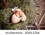 Yellow little chick hatching out of its egg - stock photo
