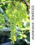 grape - stock photo
