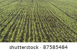 agricultural background of a field with green seedling rows - stock photo