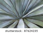 abstract full frame detail of a succulent plant - stock photo
