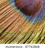 full frame abstract background of a peacock feather detail - stock photo