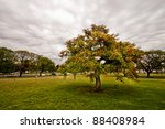 Isolated flower tree and overcast sky - stock photo