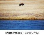 Bison in Yellowstone - stock photo