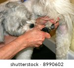 dog having nails clipped - stock photo