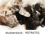 Mother cat and her newborn kittens - stock photo