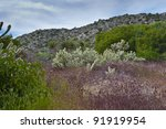 Desert wildflowers and cactus in bloom in Anza Borrego Desert State Park. California, USA - stock photo