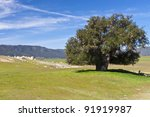 View of  a beautiful valley with big tree and stones. California, USA - stock photo