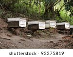beehives in the forest - stock photo