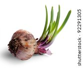 Ripe onions isolated against white background. - stock photo