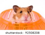 This is a Brown Hamster with his Yellow Ball. The colorful bottom adds depth and a touch of Spring. - stock photo