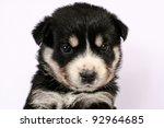 Rottweiler Puppy - stock photo