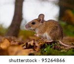 yellow necked mouse seen from side - stock photo
