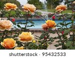 Bush of yellow pink roses in a garden near pool with fountain. - stock photo