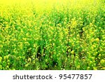 Yellow flower camp background - stock photo