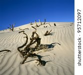 Dead wood in Death valley, California, USA - stock photo