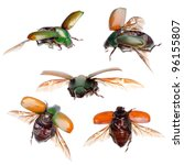 animal set insect green scarab beetle isolated collection - stock photo
