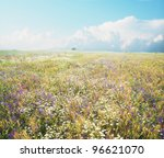 Daisies, poppies, cornflower and a lot of other summer flowers are blooming on this wheat field in summer. - stock photo