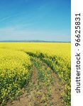 A cultivated rapeseed flower field in Romania. - stock photo