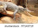 crocodile open mouth - stock photo