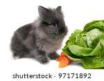 Baby rabbit eating - stock photo