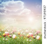 Tulip field. Easter spring background with tulips in a beautiful meadow and cloudscape - stock photo