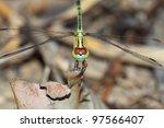 Dragonfly closeup - stock photo