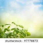 Fresh basil on bokeh spring background - stock photo