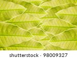 Green leaf background in green fresh nature - stock photo