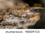 red ant in green nature or in forest - stock photo