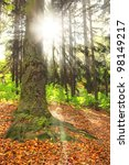 Sunny forest in the morning - stock photo