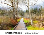 Birch trees and trail in early spring. Big Four Ice Caves hike in WA state, May. - stock photo