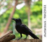 raven sitting on a wood - stock photo