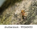 red ant macro in green nature or in forest - stock photo