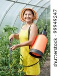Mature woman spraying tomato plant in hothouse - stock photo