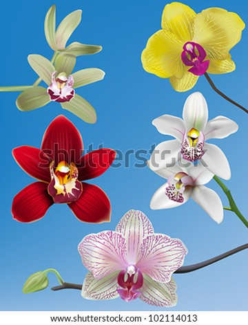 collection of orchid vectors