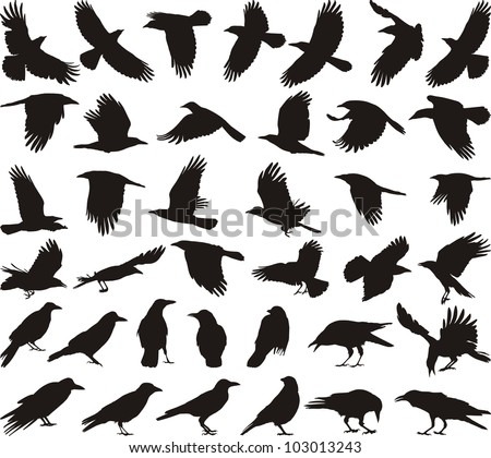 black isolated vector