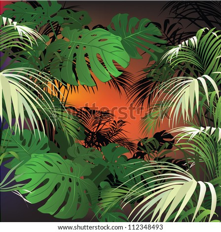 tropical landscape  tropical