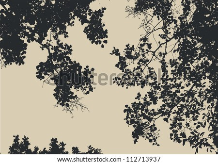 tree and branches silhouette
