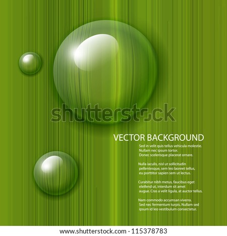 vector water drops on green