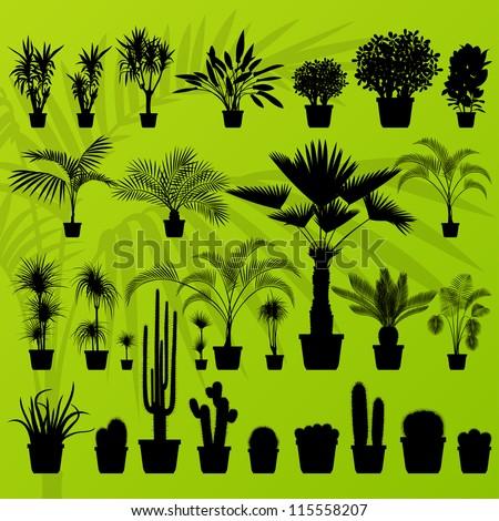 exotic plant  bush  palm tree