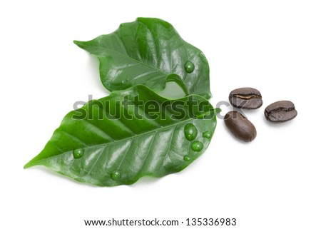green coffee leaf and coffee