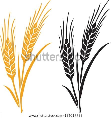 ears of wheat  barley or rye