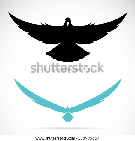 vector image of an bird  pigeon