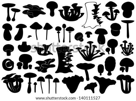 set of different mushrooms