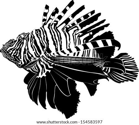 marine aquarium fish zebra