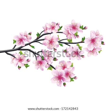cherry blossom pink   violet