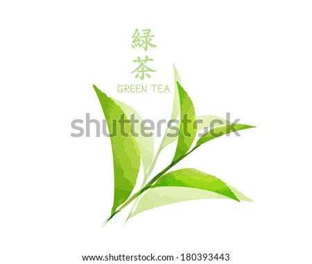 green tea vector