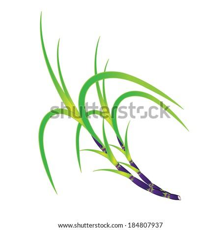 Sugar Cane Art
